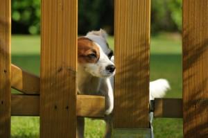 hund-hinter-gartenzaun